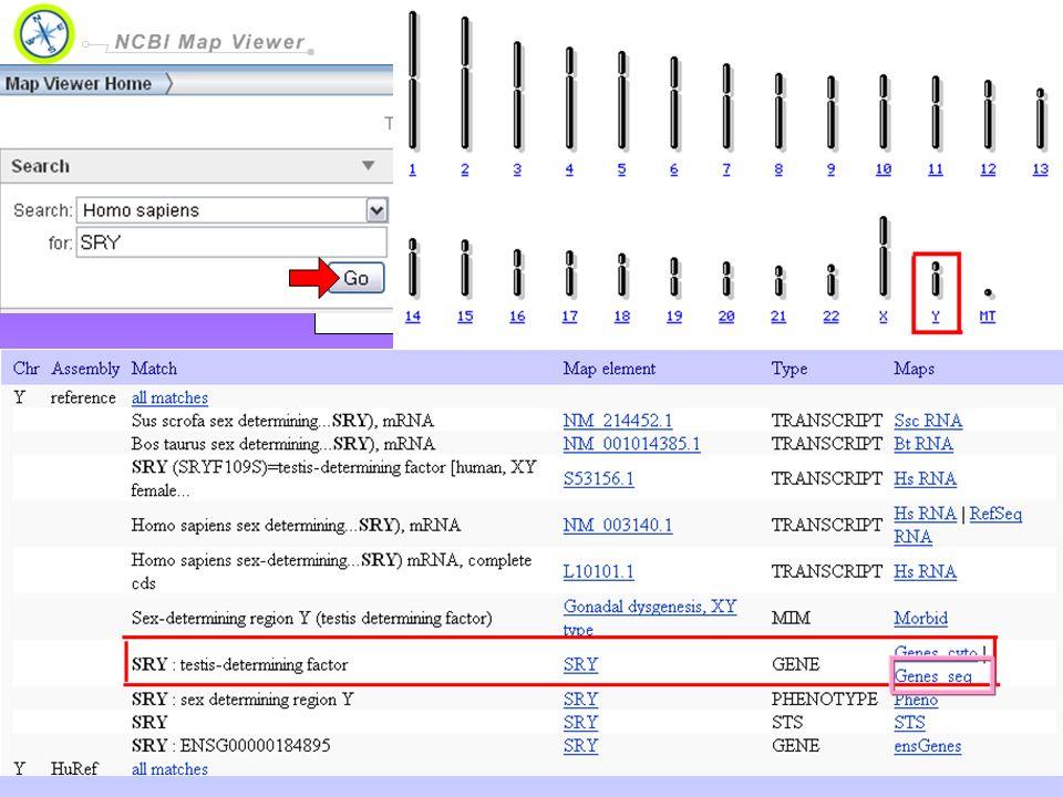 Map Viewer permette di visualizzare e cercare il genoma completo di un organismo, visualizzare la mappa cromosomica, e ingrandire progressivamente in