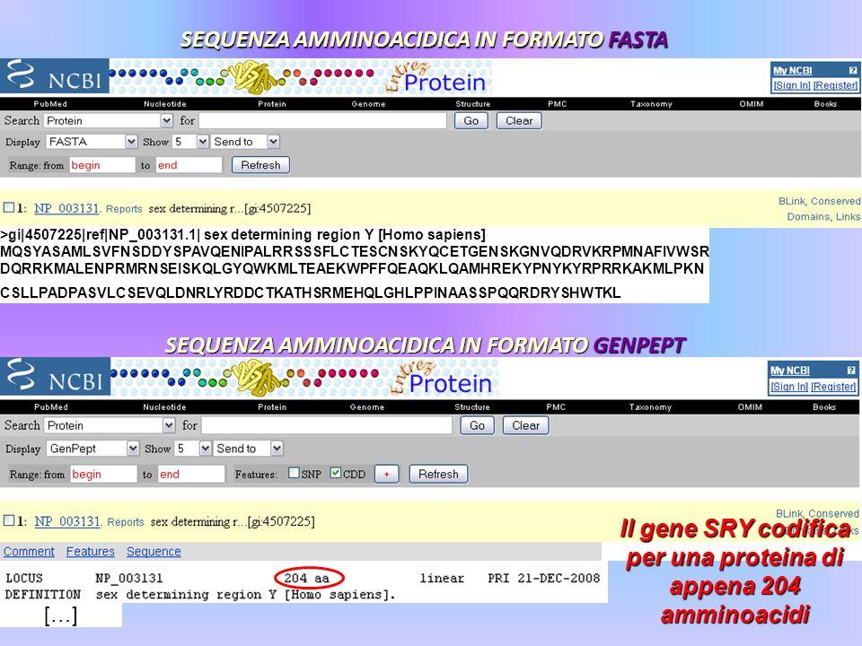 SEQUENZA AMMINOACIDICA IN FORMATO FASTA >gi|4507225|ref|NP_003131.1| sex determining region Y [Homo sapiens] MQSYASAMLSVFNSDDYSPAVQENIPALRRSSSFLCTESCN