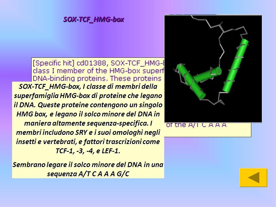 SOX-TCF_HMG-box, I classe di membri della superfamiglia HMG-box di proteine che legano il DNA. Queste proteine contengono un singolo HMG box, e legano