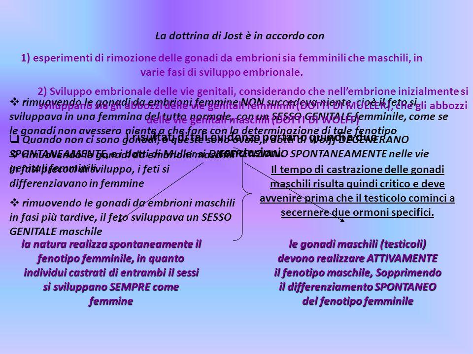 La dottrina di Jost è in accordo con 1) esperimenti di rimozione delle gonadi da embrioni sia femminili che maschili, in varie fasi di sviluppo embrio