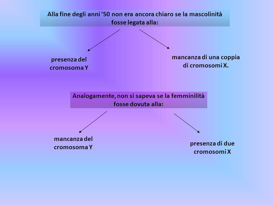 Alla fine degli anni 50 non era ancora chiaro se la mascolinità fosse legata alla: presenza del cromosoma Y mancanza di una coppia di cromosomi X. Ana