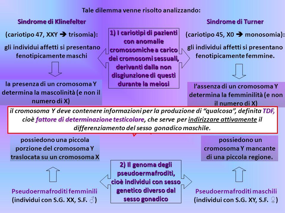 Tale dilemma venne risolto analizzando: Sindrome di Klinefelter (cariotipo 47, XXY trisomia): gli individui affetti si presentano fenotipicamente masc