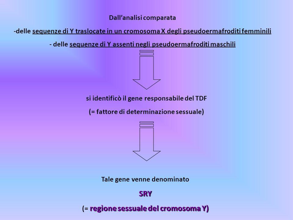 Dallanalisi comparata -delle sequenze di Y traslocate in un cromosoma X degli pseudoermafroditi femminili - delle sequenze di Y assenti negli pseudoer