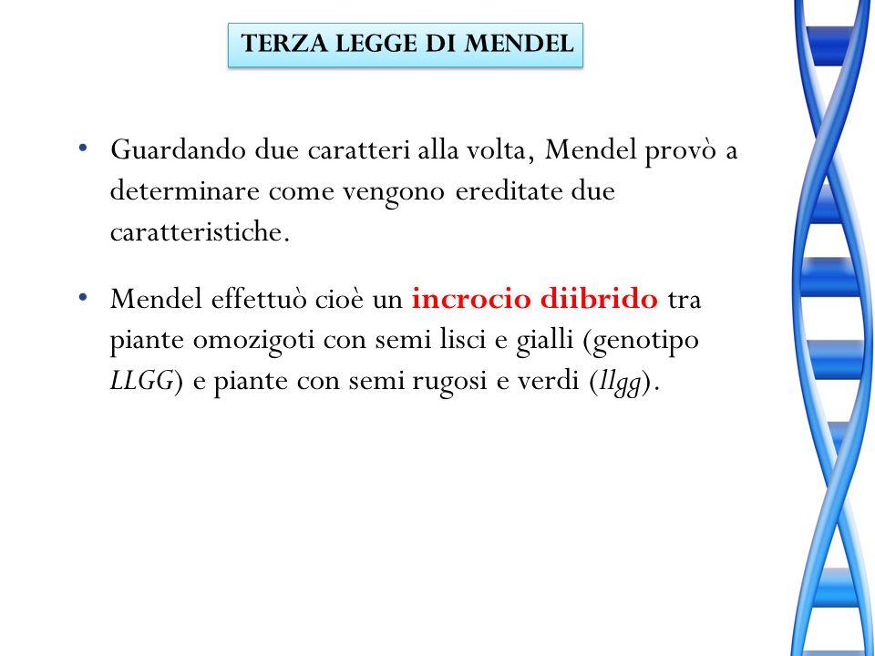 Guardando due caratteri alla volta, Mendel provò a determinare come vengono ereditate due caratteristiche. Mendel effettuò cioè un incrocio diibrido t