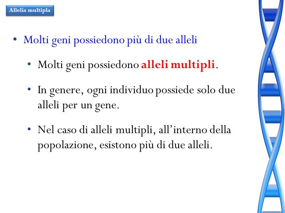 Molti geni possiedono più di due alleli Molti geni possiedono alleli multipli. In genere, ogni individuo possiede solo due alleli per un gene. Nel cas
