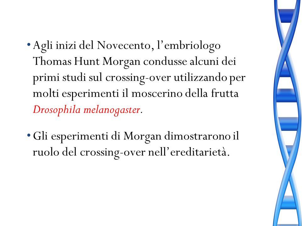 Agli inizi del Novecento, lembriologo Thomas Hunt Morgan condusse alcuni dei primi studi sul crossing-over utilizzando per molti esperimenti il moscer