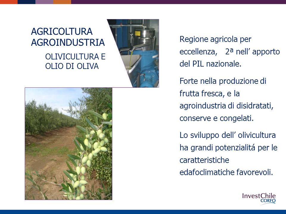 AGRICOLTURA AGROINDUSTRIA OLIVICULTURA E OLIO DI OLIVA Regione agricola per eccellenza, 2ª nell apporto del PIL nazionale.