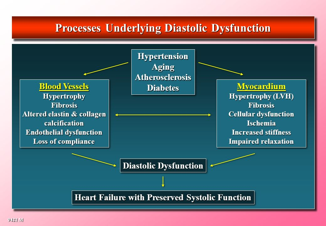 Processes Underlying Diastolic Dysfunction 9421 M HypertensionAgingAtherosclerosisDiabetesHypertensionAgingAtherosclerosisDiabetes Diastolic Dysfuncti