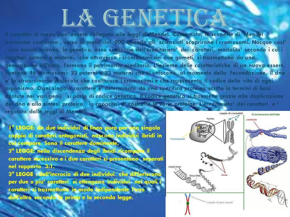 LA GENETICA Il concetto di razza puo essere collegato alle leggi di Mendel. Come noto, le scoperte di Mendel trovarono conferma, verso la meta del 900