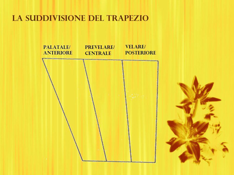 La suddivisione del trapezio palatale/ Anteriore palatale/ Anteriore prevelare/ centrale velare/ posteriore