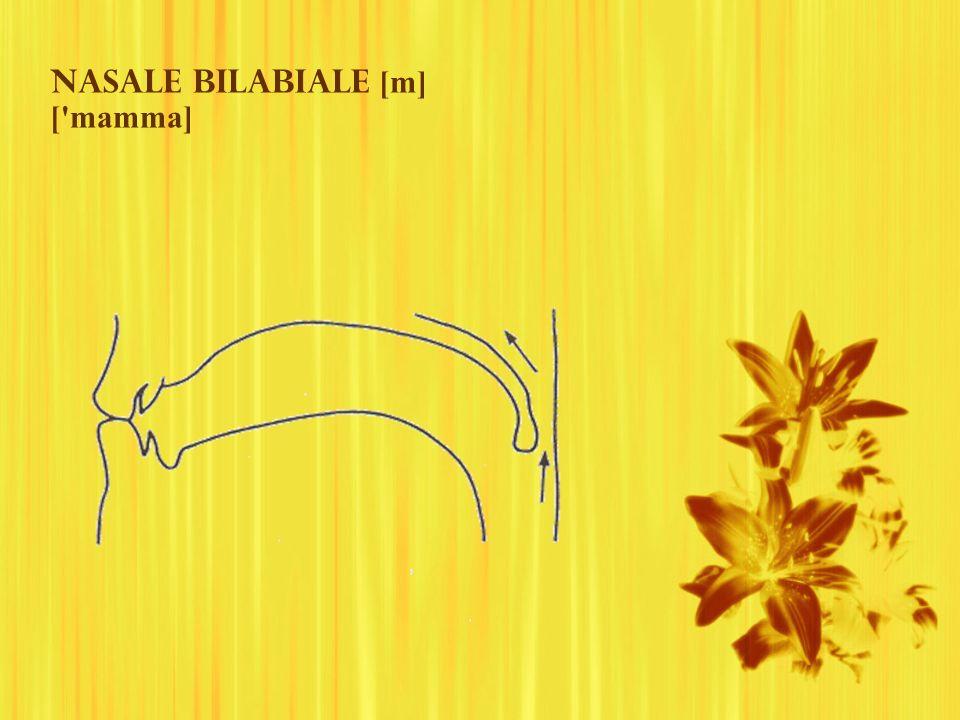 Nasale bilabiale [m] ['mamma]