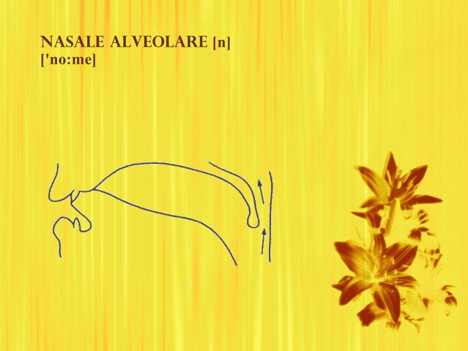 Nasale ALVEOLAre [n] ['no:me]