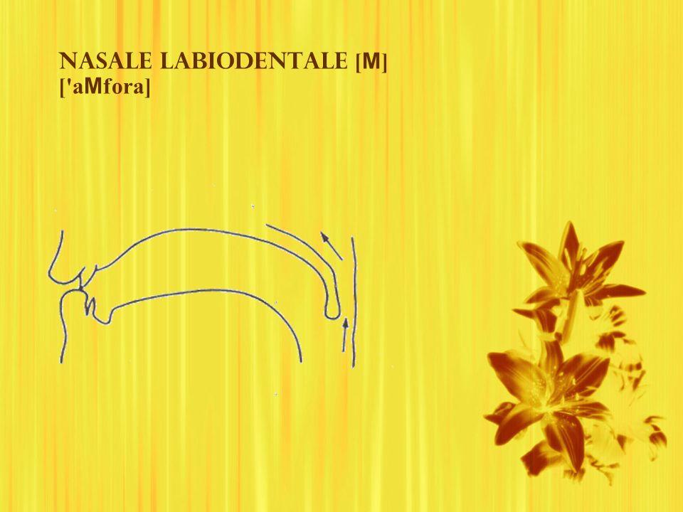 Nasale labiodentale [ M ] ['a M fora]