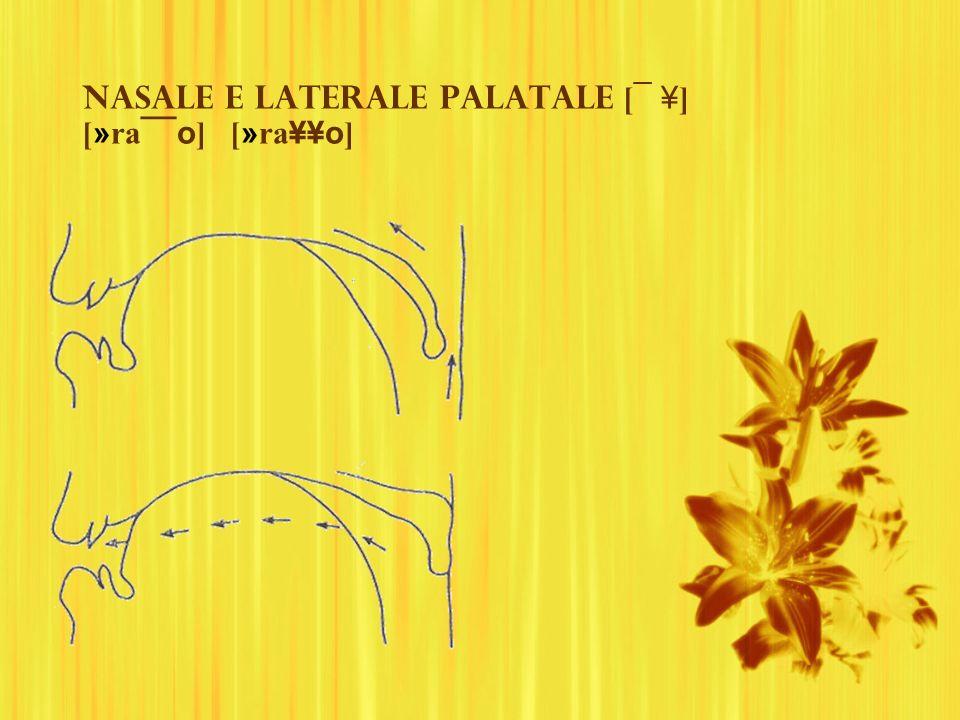 Nasale e laterale palatale [ ¯ ¥ ] [ » ra ¯¯o ] [ » ra ¥¥o ]