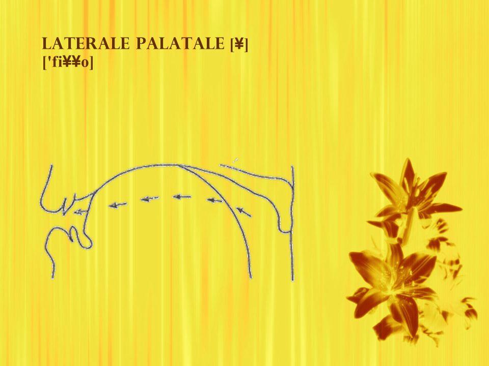 Laterale palatale [ ¥ ] ['fi ¥¥ o]