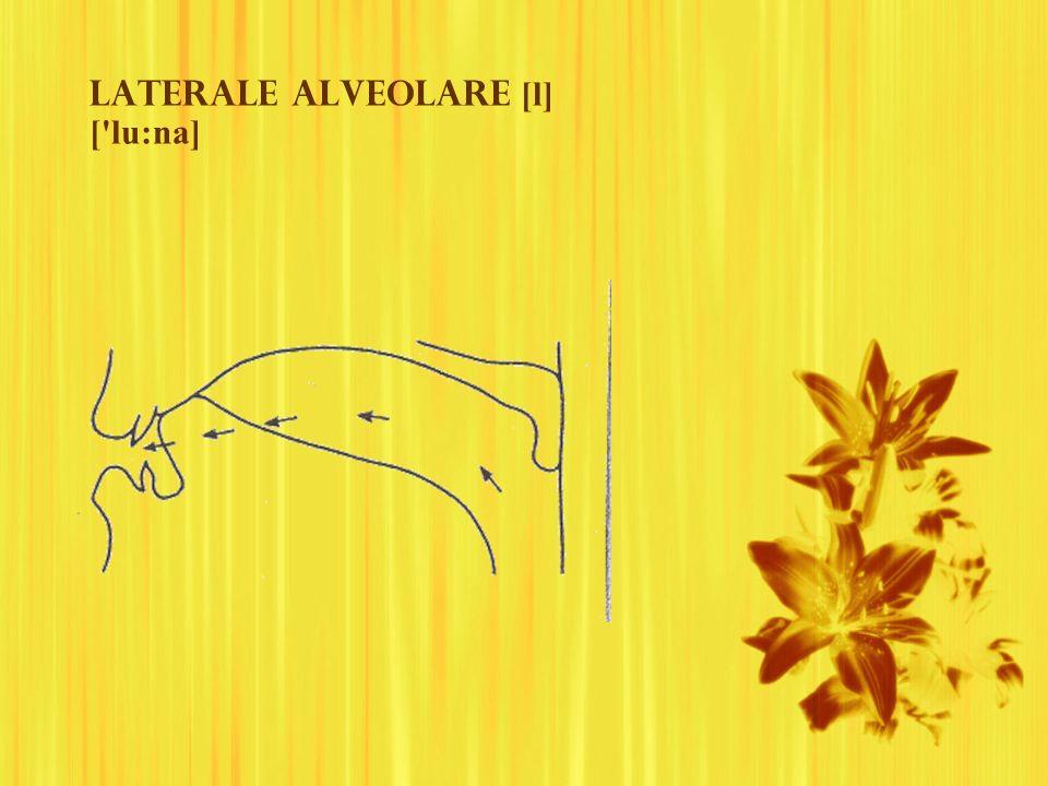 Laterale alveolare [l] ['lu:na]