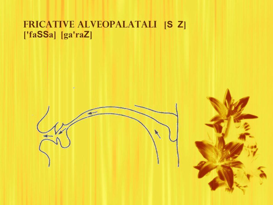 Fricative alveopalatali [ S Z ] ['fa SS a] [ga'ra Z ]