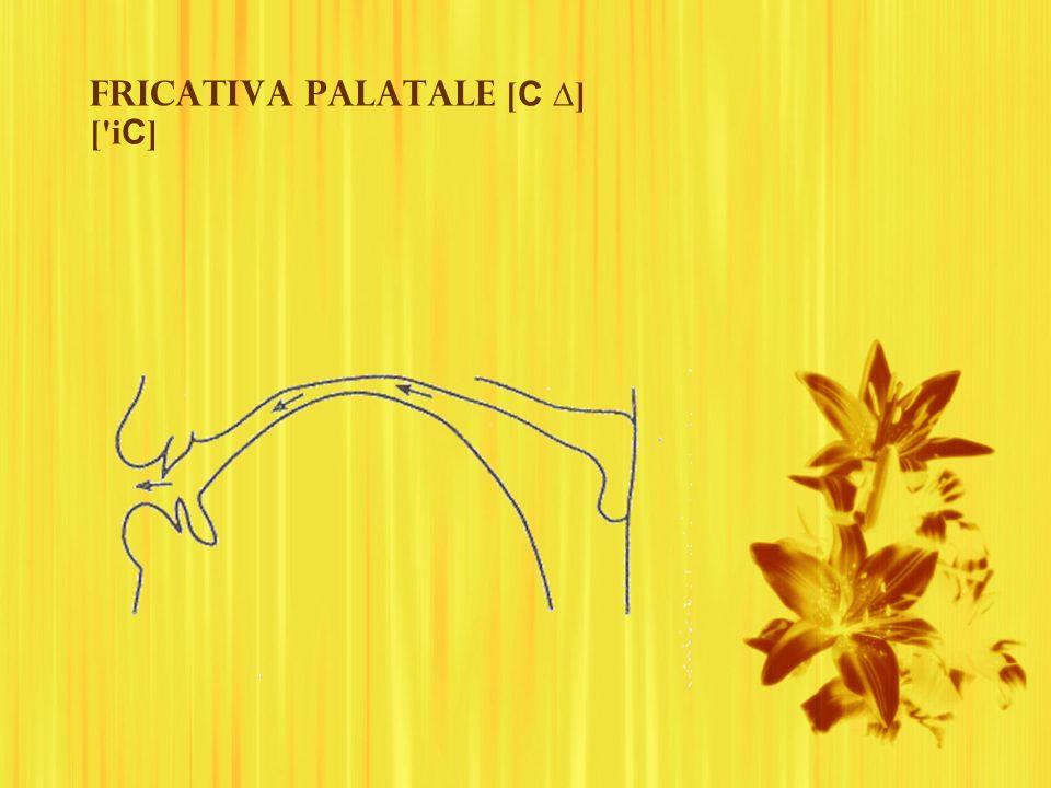 Fricativa palatale [ C ] ['i C ]