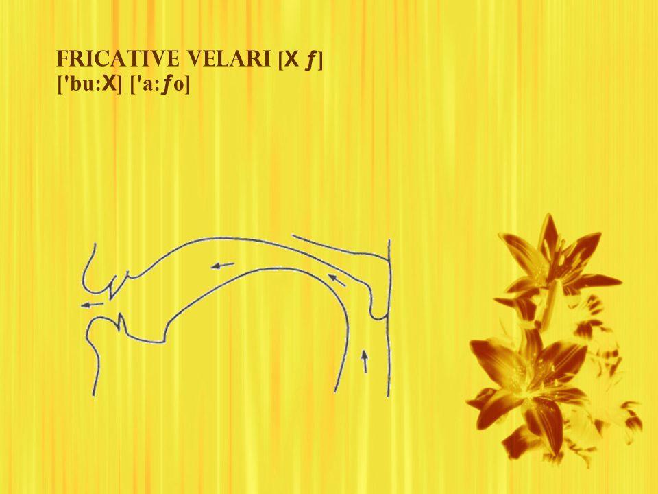 Fricative velari [ X ƒ ] ['bu: X ] ['a: ƒ o]