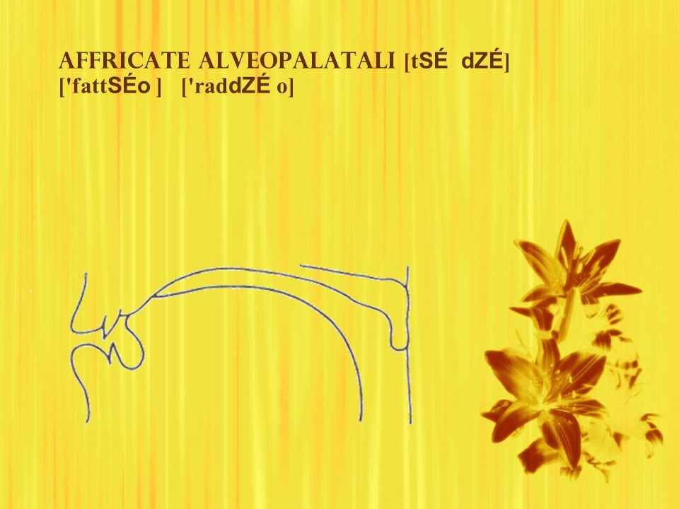 Affricate alveopalatali [t SÉ dZÉ ] ['fatt SÉo ] ['rad dZÉ o]