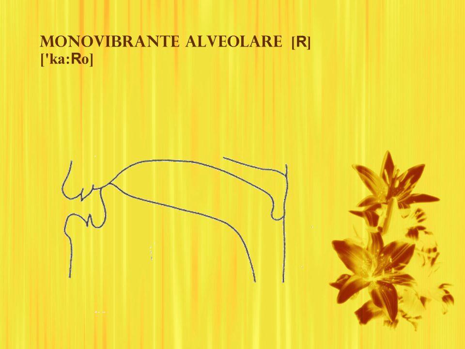Monovibrante alveolare [ R ] ['ka: R o]