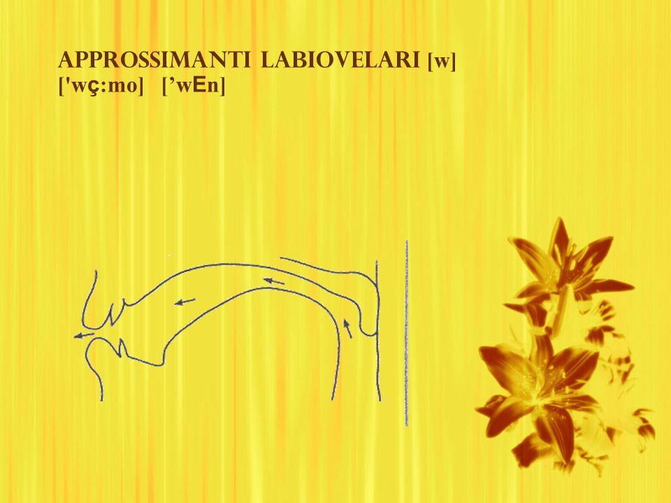 Approssimanti labiovelari [w] ['w ç :mo] [w E n]