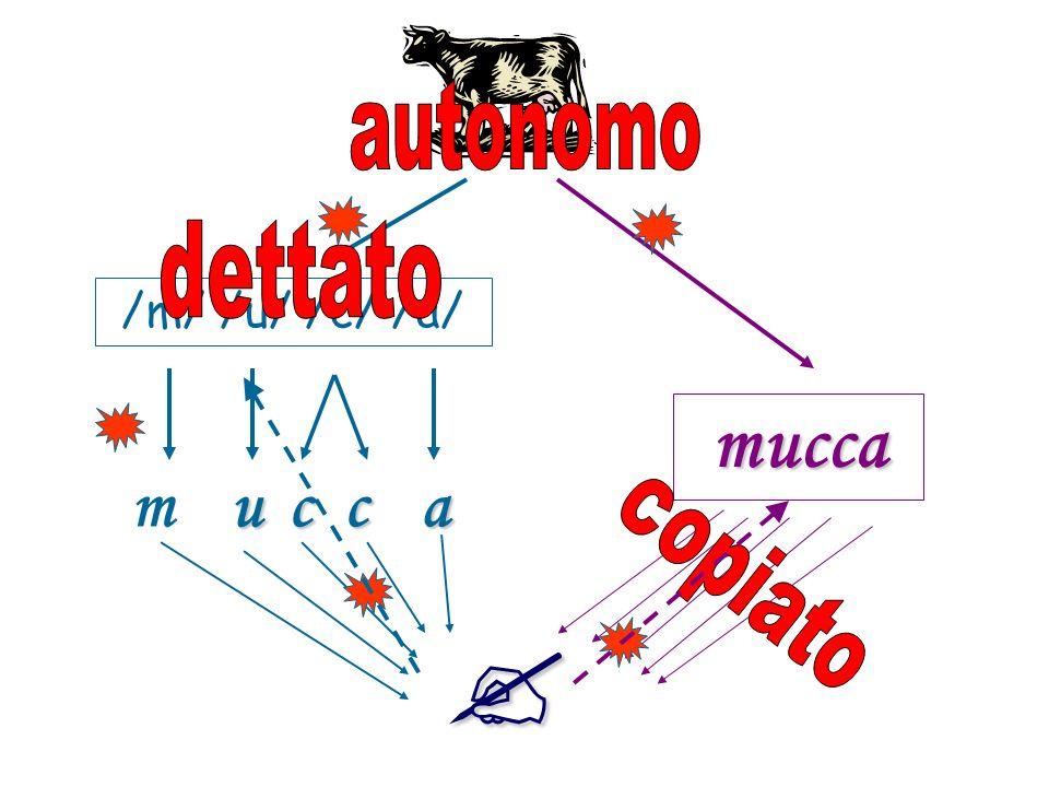 /m/ /u/ /c/ /a/ m u c c a mucca