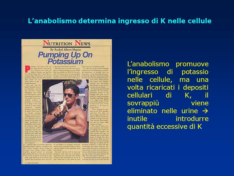 Lanabolismo promuove lingresso di potassio nelle cellule, ma una volta ricaricati i depositi cellulari di K, il sovrappiù viene eliminato nelle urine
