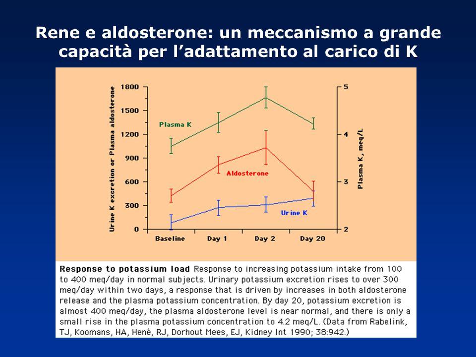 Rene e aldosterone: un meccanismo a grande capacità per ladattamento al carico di K