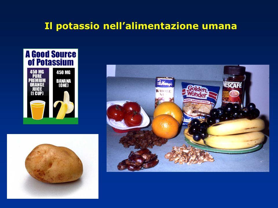 Il potassio nellalimentazione umana