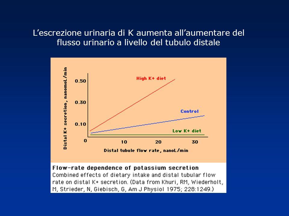 Lescrezione urinaria di K aumenta allaumentare del flusso urinario a livello del tubulo distale