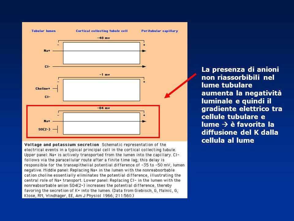 La presenza di anioni non riassorbibili nel lume tubulare aumenta la negatività luminale e quindi il gradiente elettrico tra cellule tubulare e lume è