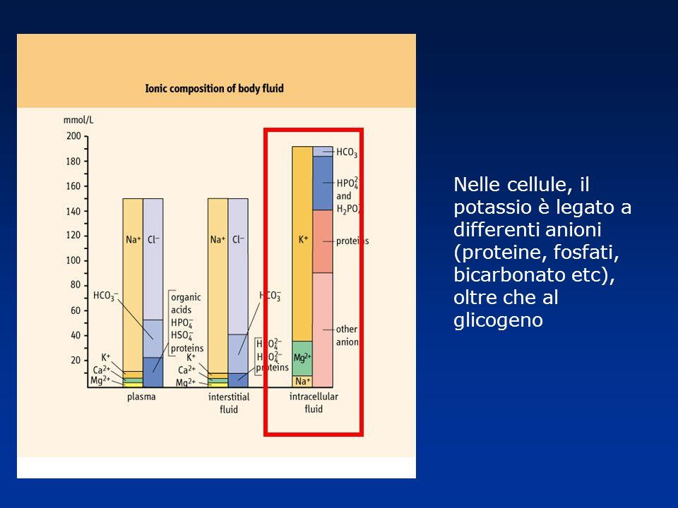Nelle cellule, il potassio è legato a differenti anioni (proteine, fosfati, bicarbonato etc), oltre che al glicogeno