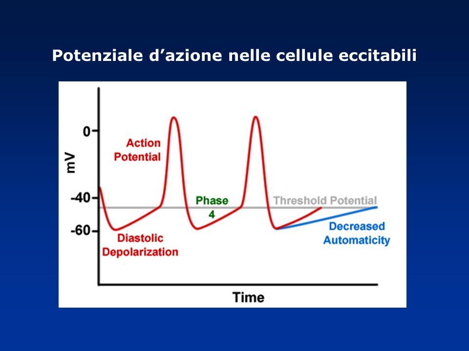 Potenziale dazione nelle cellule eccitabili
