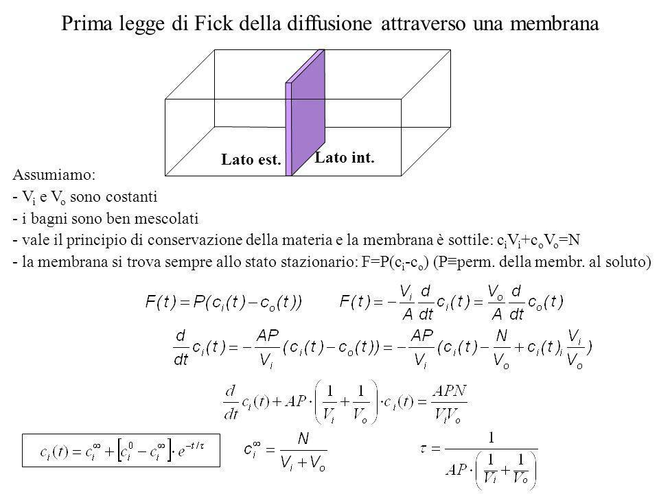 Diffusione attraverso una membrana aspetti quantitativi Rappresentazione grafica del processo di diffusione animazioni