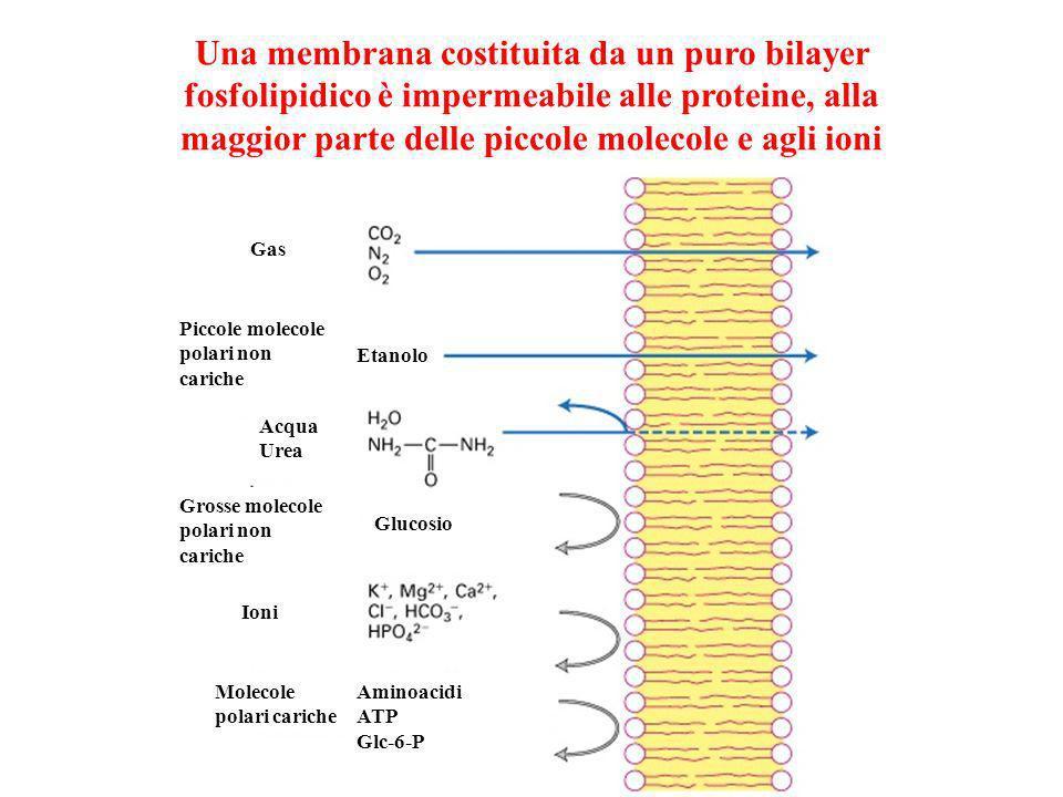 Diffusione attraverso una membrana la concentrazione di soluto varia nel tempo con un andamento esponenziale 63% di (c - c o ) = 77 37% di (c o - c )