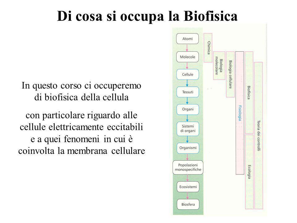 Elettrofisiologia e Biofisica di Membrana Laurea Magistrale in Neurobiologia Docente: Prof. Mauro Toselli mtoselli@unipv.it Potrete scaricare gli argo