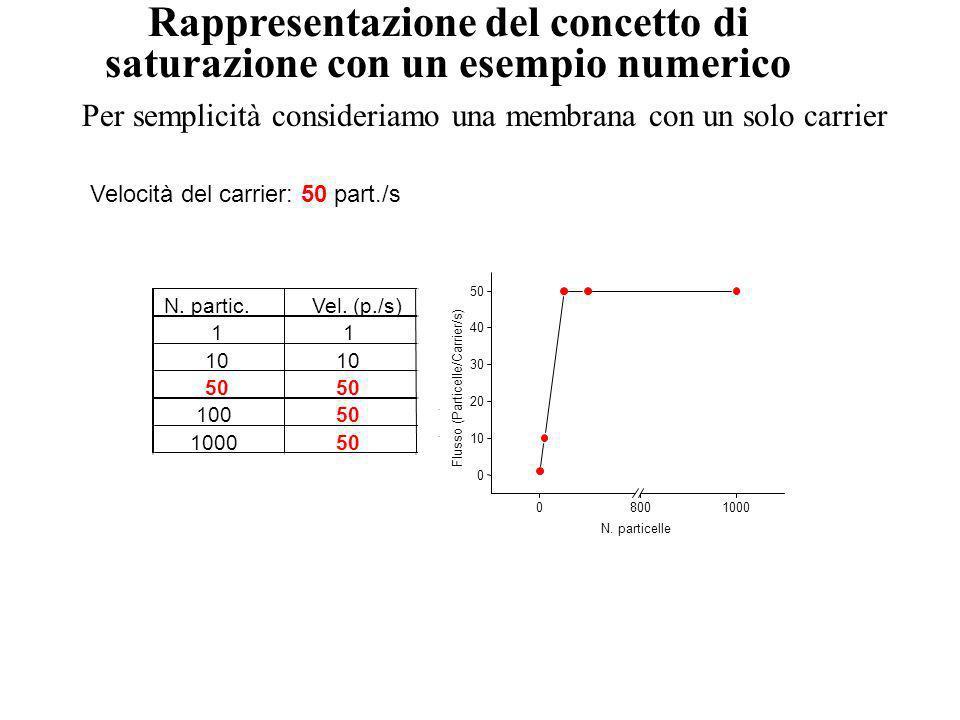050100150200 0 5 10 15 20 Flusso netto [moli/(cm 2 s] C (mM) 10 4 F max 010 2030 0 100 200 300 F C F=k d C Analisi cinetica del transporto di una mole