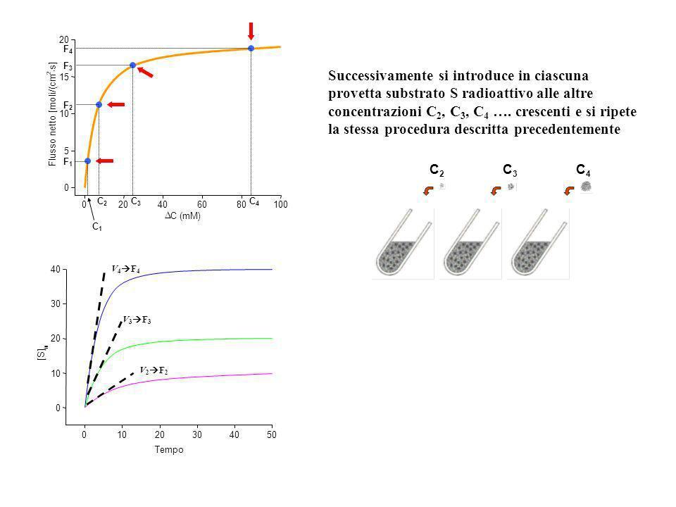 ? C1C1 1.Si introduce nella provetta il substrato S radioattivo ad una concentrazione C 1 2.A tempi successivi (t 0, t 1, t 2, t 3, …) si preleva un c