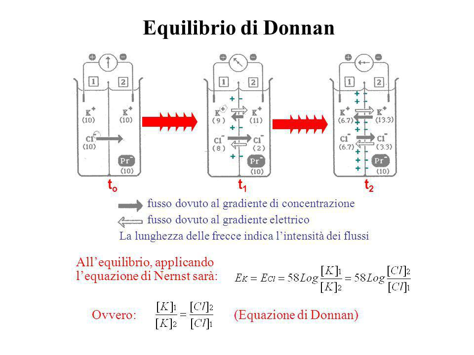 ++++ ++++ ---- ---- ++++++++ ++++++++ -------- -------- K + Cl - 100 mM Na + Cl - 100 mM K+K+ K+K+ K+K+ K+K+ K+K+ ΔCΔC ΔEΔE ΔCΔC ΔEΔE ΔCΔC ΔEΔE 0 Quan