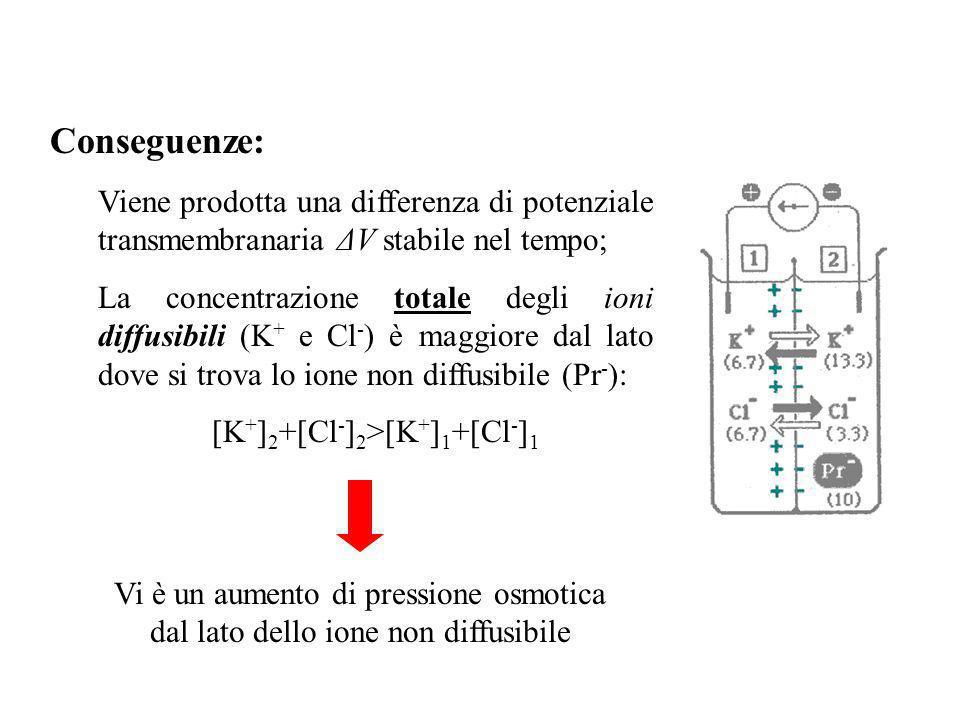 Equilibrio di Donnan fusso dovuto al gradiente di concentrazione fusso dovuto al gradiente elettrico La lunghezza delle frecce indica lintensità dei f