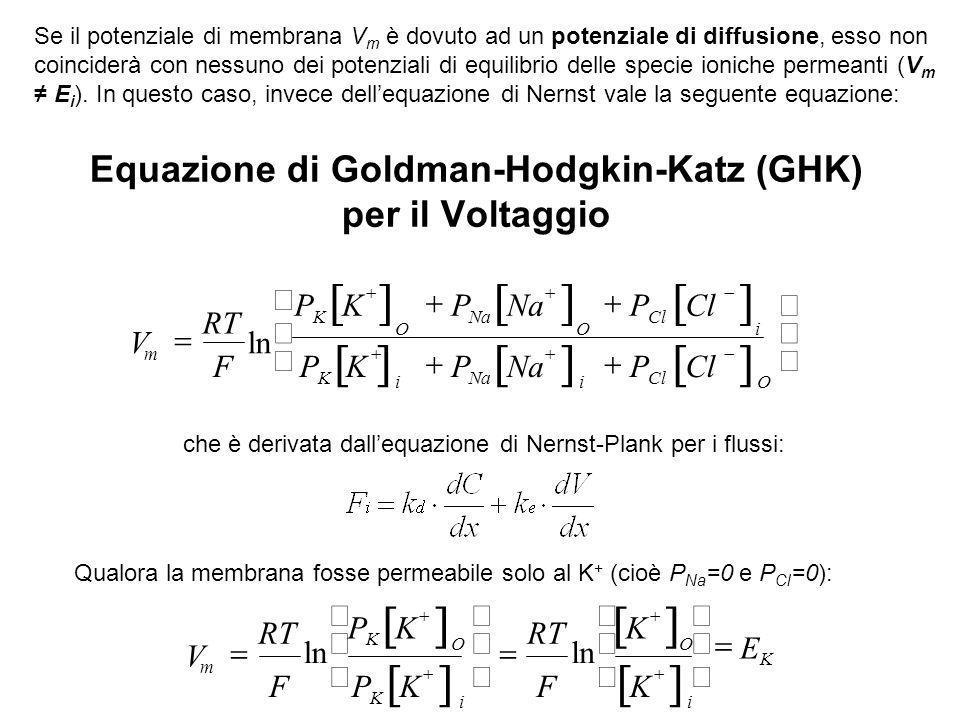 K + Na + Cl - Il potenziale di membrana è una conseguenza di una permanente differenza di concentrazione ionica ai due capi della membrana Questa è pr