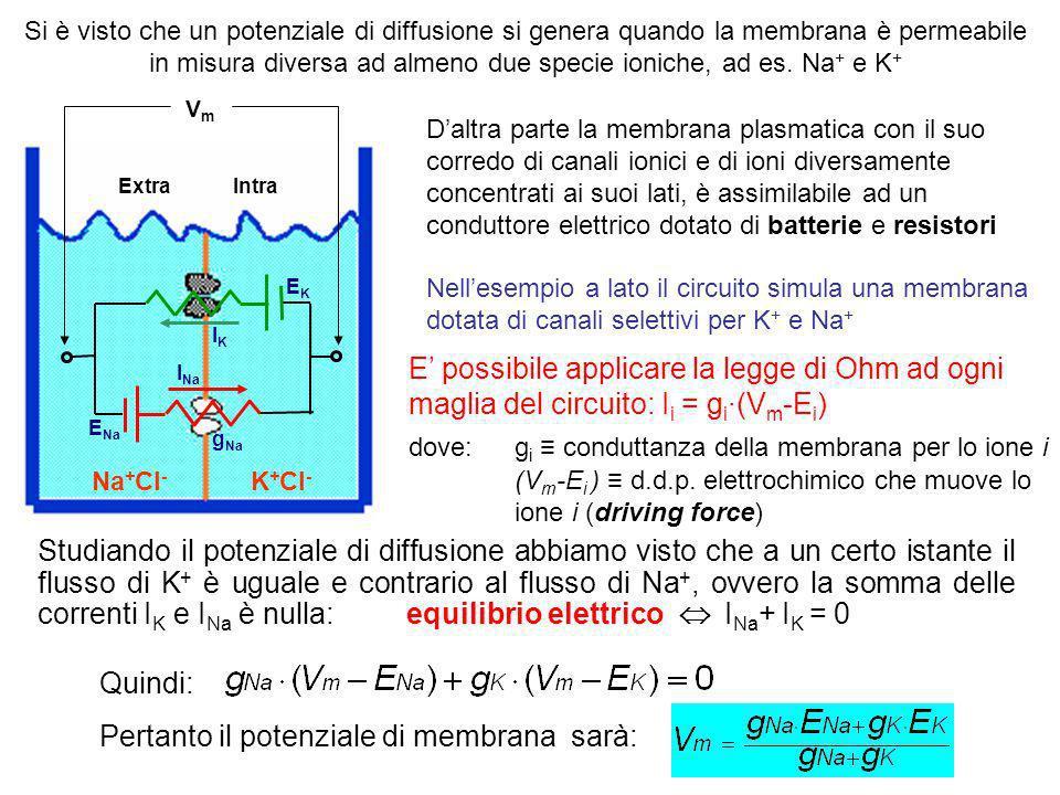 Pertanto, un canale e il gradiente di concentrazione dello ione permeante che lo attraversa possono essere rappresentati da un punto di vista elettric