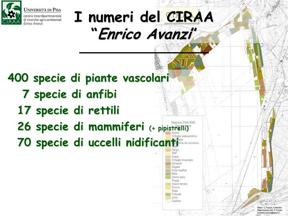 I numeri del CIRAAEnrico Avanzi 400 specie di piante vascolari 400 specie di piante vascolari 7 specie di anfibi 7 specie di anfibi 17 specie di retti