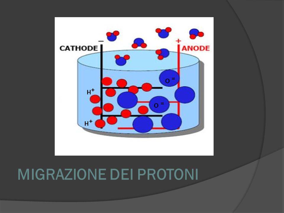 MIGRAZIONE DEI PROTONI O = O = H + H +