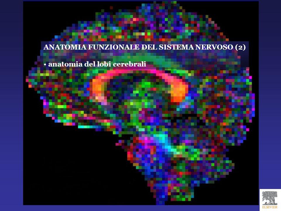 Lobi e solchi degli emisferi cerebrali