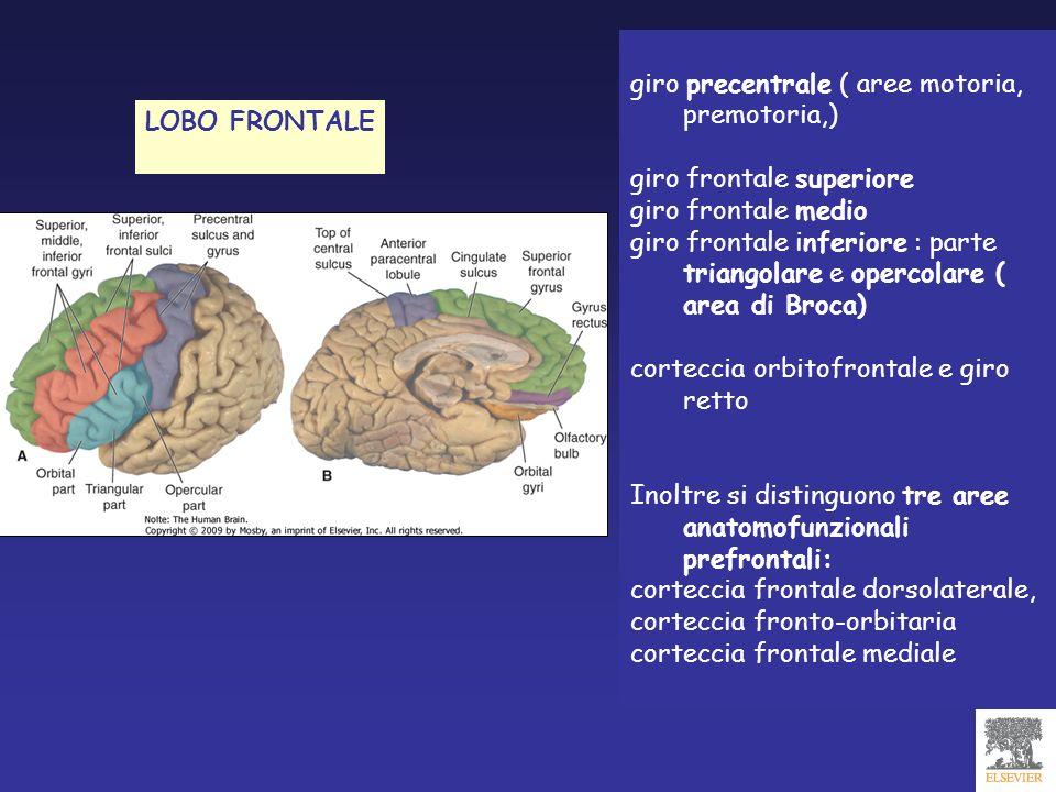 giro precentrale ( aree motoria, premotoria,) giro frontale superiore giro frontale medio giro frontale inferiore : parte triangolare e opercolare ( a