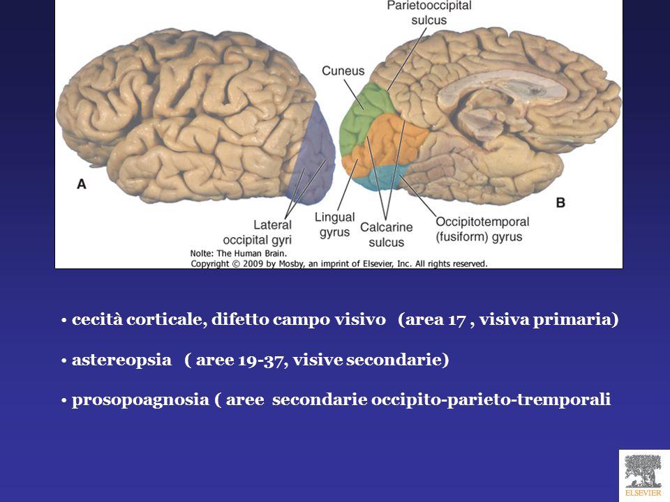cecità corticale, difetto campo visivo (area 17, visiva primaria) astereopsia ( aree 19-37, visive secondarie) prosopoagnosia ( aree secondarie occipi