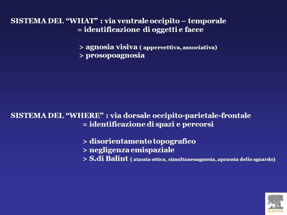 SISTEMA DEL WHAT : via ventrale occipito – temporale = identificazione di oggetti e facce > agnosia visiva ( appercettiva, associativa) > prosopoagnos