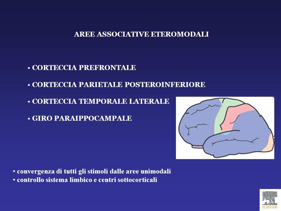 AREE ASSOCIATIVE ETEROMODALI CORTECCIA PREFRONTALE CORTECCIA PARIETALE POSTEROINFERIORE CORTECCIA TEMPORALE LATERALE GIRO PARAIPPOCAMPALE convergenza